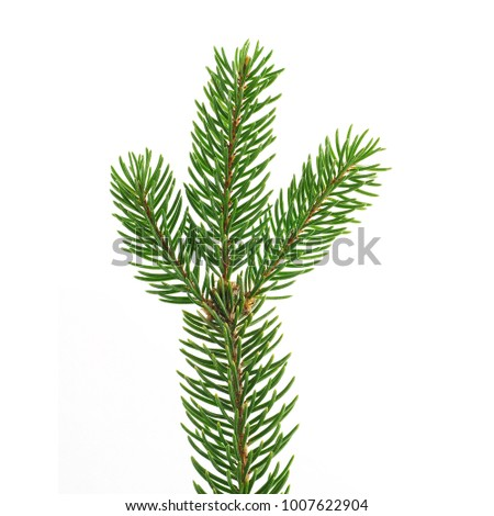 a twig of spruce on a white background #1007622904