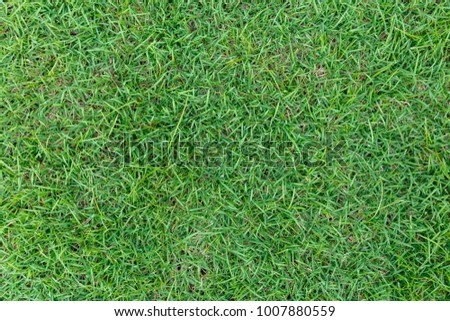 Grass texture background for golf course, soccer field or sports concept design. #1007880559