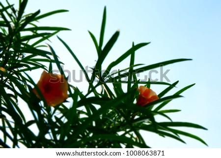 Green nature garden foliage foliage foliage foliage flora floral botanical botanical #1008063871