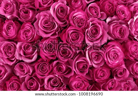floral background. roses background. Beautiful gentle pink roses #1008196690