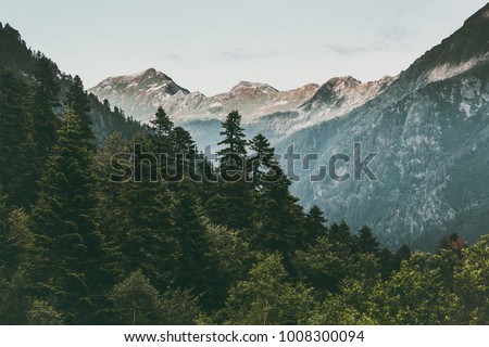 Coniferous Forest and Mountains Landscape Travel serene scenery summer green #1008300094