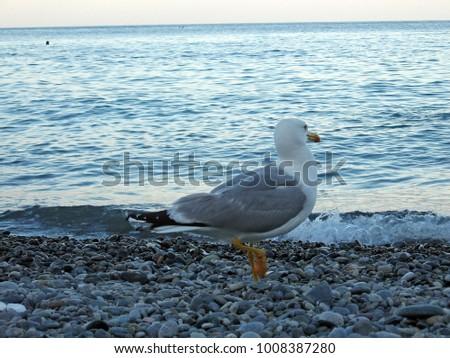seagull near the sea #1008387280