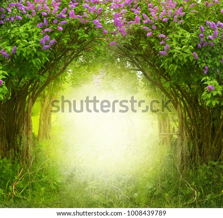 Fantasy  background . Magic forest.Beautiful spring  landscape.Lilac trees in blossom
