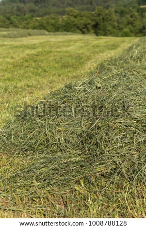 summer hay making field landscape in rural countryside of south germany #1008788128