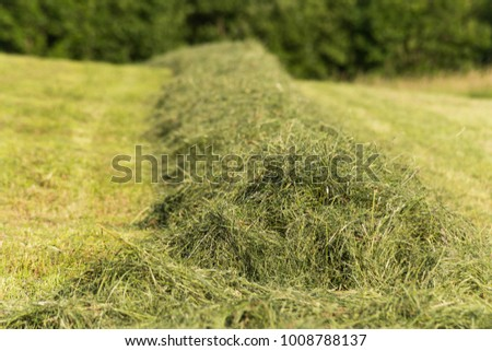 summer hay making field landscape in rural countryside of south germany #1008788137