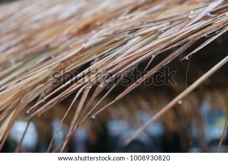 Roof made by Vetiver  #1008930820