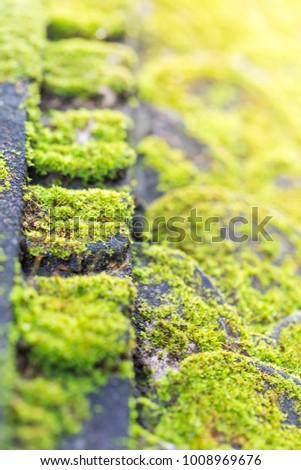 Moss Green Natural Grass #1008969676