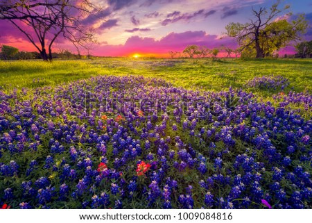 Sunrise in the Texas Hill Country Royalty-Free Stock Photo #1009084816