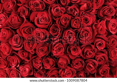 Natural red roses background #1009087804