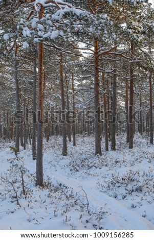 Swamp winter snow #1009156285