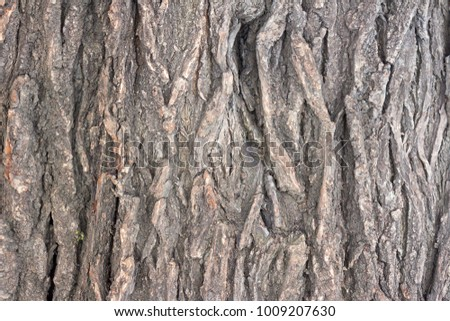 The bark of the old tree as a background #1009207630