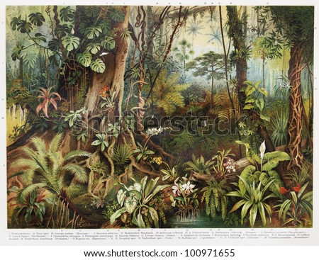 Vintage drawing of tropical forest plants from the beginning of 20th century period - Picture from Meyers Lexicon books collection (written in German language) published in 1908, Germany.