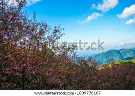 Colors of the forest,Prunus cerasoides.(Wild Himalayan Cherry) tree at Phu Chee Fah , Chiang Rai Thailand. #1009778107