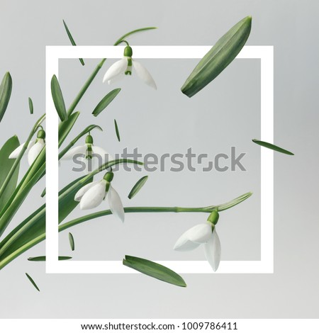 Creative layout made with snowdrop flowers on bright background with frame. Spring minimal concept. #1009786411