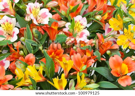 Beautiful bouquet of colorful flowers (Alstroemeria) #100979125