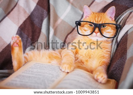 Cute red cat in glasses lying on sofa with book #1009943851