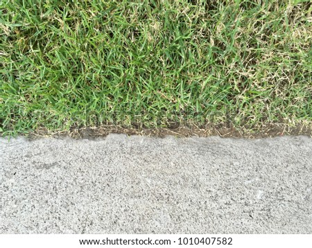 Grass with cement background for texture abstract #1010407582