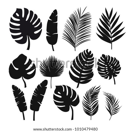 Set of black silhouettes of tropical leaves palms, trees. Vector Royalty-Free Stock Photo #1010479480