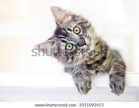 A young kitten gazing at the viewer curiously with a head tilt Royalty-Free Stock Photo #1011092413