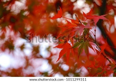 Closeup Autumn leaves #1011299311