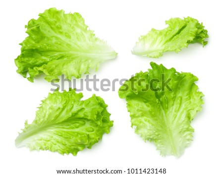 Lettuce leaves isolated on white background. Batavia salad. Top view  #1011423148