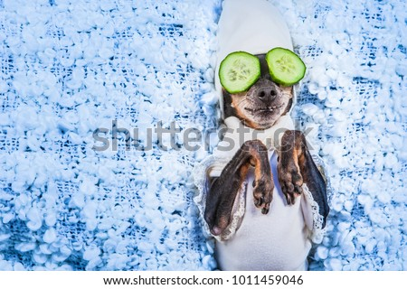 Spa treatments. A dog in his pajamas. Mask of cucumbers. A dog with cucumbers. #1011459046