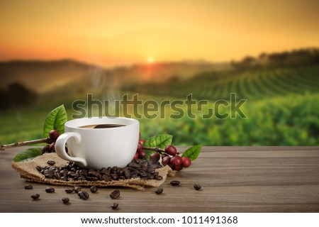Hot coffee cup with fresh organic red coffee beans and the roasted coffee beans on the wooden table and the plantations background with copy space for your text. #1011491368