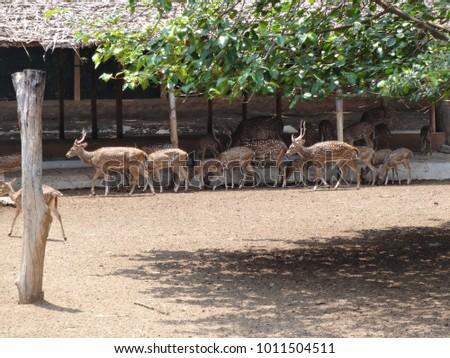 deer group at garden for going to graze grass.   #1011504511
