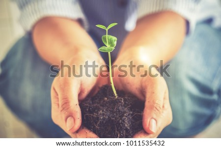 Closeup image of woman's hands  holdings a little green plant,New life growth ecology concept- Vintage effect style pictures