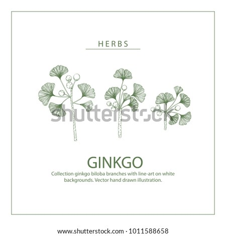 Collection ginkgo biloba branches with line-art on white backgrounds. Vector hand drawn illustration. #1011588658