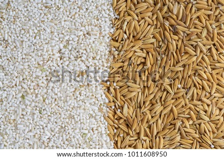 broken-milled rice and paddy  for background. #1011608950