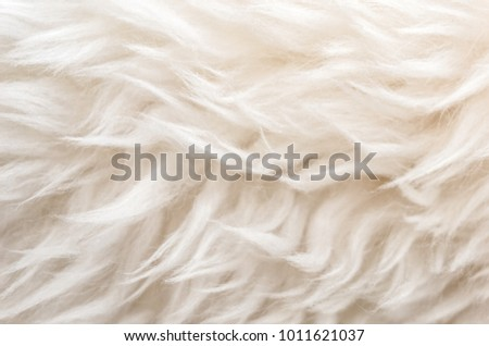 White soft wool texture background, cotton wool, light natural sheep wool, close-up texture of white fluffy fur,  wool with beige tone, fur with a delicate peach tint #1011621037