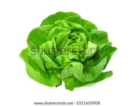 green butter lettuce vegetable or salad isolated on white back ground #1011650908