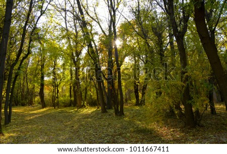 Beautiful green trees and a ray of sunshine through them. Good for website design, horizontal internet sliders and banners. #1011667411