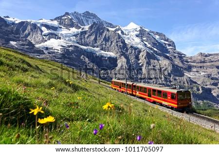 A tourist train travels on Jungfrau Railway from Jungfraujoch (Top of Europe) to Kleine Scheidegg & wild flowers bloom on a green grassy hillside under blue sunny sky in Bernese Oberland, Switzerland #1011705097