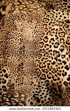 Leopard background texture #1011885463
