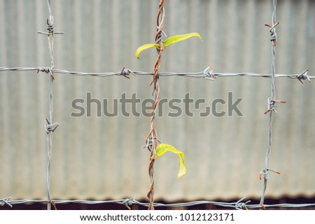 green young creeping plant, climber, typical tropical jungle plant with green leaves under sunlight with beautiful bokeh background on barbed wire as a symbol of hope and perseverance. #1012123171