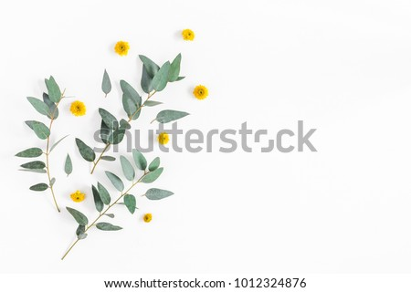 Flowers composition. Pattern made of yellow flowers and eucalyptus branches on white background. Flat lay, top view, copy space #1012324876