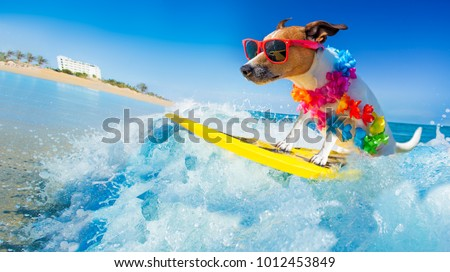 jack russell dog surfing on a wave , on ocean sea on summer vacation holidays, with cool sunglasses and flower chain #1012453849
