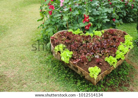 Vegetables grow in heart-shaped container in the garden shows the meaning of love by heart
