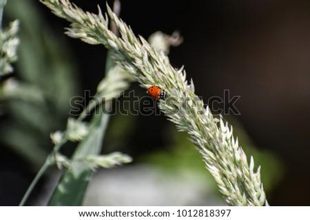 Lady bug close up #1012818397