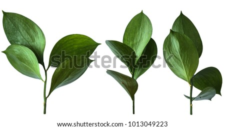 Isolated green leaves. #1013049223