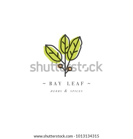 Packaging design template logo and emblem - herb and spice - bay leaf. Logo in trendy linear style Royalty-Free Stock Photo #1013134315
