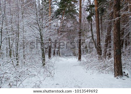 Beautiful view of the snow-covered forest.  #1013549692