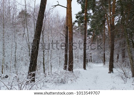 Beautiful view of the snow-covered forest.  #1013549707