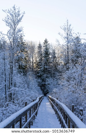 Beautiful nature and landscape photo of Swedish winter forest and trees. Nice cold day in the wood. Lovely details of branches with snow,frost and wooden bridge. Calm, peaceful outdoors image. #1013636749