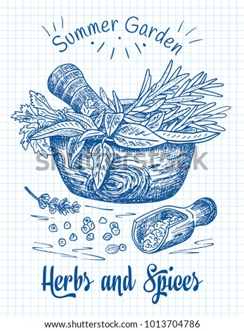Beautiful hand drawing healthy herbs and spices mortar. Herbs, basil, chervil. #1013704786