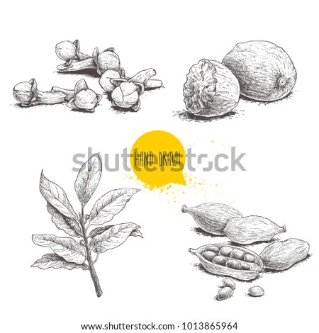 Hand drawn sketch spices set. Bay leaves branch, nutmegs, cardamoms and cloves. Herbs, condiments and spices vector illustration isolated on white background. Royalty-Free Stock Photo #1013865964