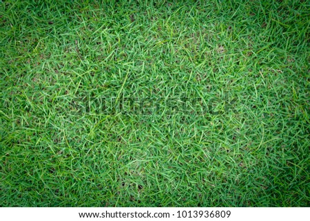 Grass texture background for golf course, soccer field or sports concept design. #1013936809