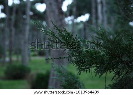 Beautiful park with grass and of tree #1013964409